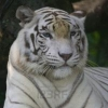 Florida Assistant Joins in... - last post by WhiteTiger